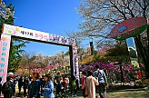 진달래꽃동산에서 열린 원미산 진달래축제2017